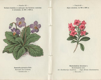 Batchelor's Buttons, Hairy Alpenrose, Wintergreen, Lousewort, 1898, French Botanical Book Plate, 99-112, 100-111, Henry Correvon