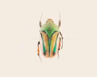 Bug Art, Nature Photograph, orange, green, nature decor, wall art print, emerald, minimalist, boys room decor, playroom, color photograph