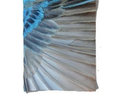 Fleece Blanket - Blue Bird Feather - Indigo Bunting - Decorative Fleece Blanket - Baby Blanket - Medium Large Blanket