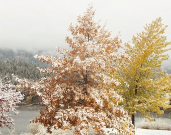 First Snow at the Lake