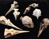 Bird Skull Miscasts Batch M