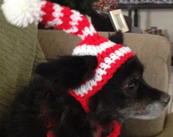 Wheres's Waldo Dog Hat