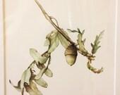 Original Botanical Watercolor on Paper of White Oak