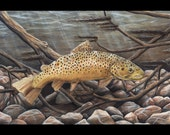 Brown Trout - 5x7 Art Print - Beautiful Brown Trout Drawing