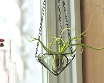 Mini Wall Hanging Air Plant Holder Mirror Clear By