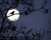 Robin in Full Moon, Moon rising, Bird Silhouette