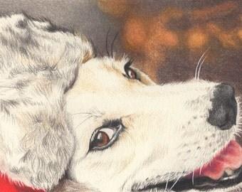 Custom Pet Portrait in Colored Pencil - 8x10