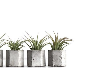 Set of 3 Concrete Hex Micro Planter with Airplant, Modern Airplant Planters, Geometric Planter, Modern Wedding Favors, Hexagon, frae and co