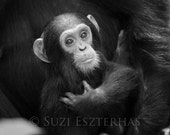 Cuddle Baby Chimpanzee Ph...