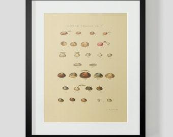 Vintage Shells Ocean Sea Clams Snails Plate 6