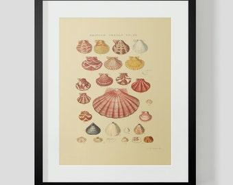 Vintage Shells Ocean Sea Clams Snails Plate 9