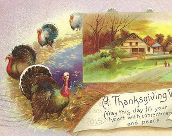Turkeys on Parade and Country Farmhouse on Vintage Thanksgiving Postcard 1911