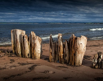 Weathered Wood Shore Pilings on a Sandy Ocean Beach on Prince Edward Island in Canada No.140 - A Fine Art Nautical Seascape Photograph