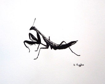 Praying Mantis original charcoal sketch, original art, charcoal drawing, pencil drawing, insect drawing, wildlife art, black and white