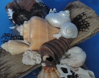 Driftwood and Shells Cross