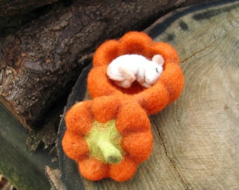 Sleeping baby mouse in a pumpkin