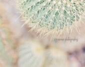Cactus Photography, Cactus Print, Pastel, Botanical Print, Cactus Wall Art, Cactus Decor, Desert Art, Southwest Print, Cactus Photo