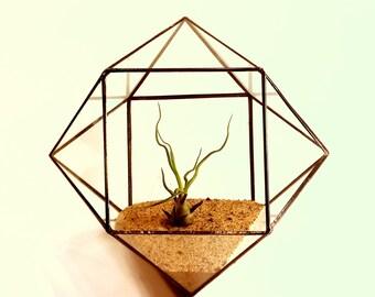 Geometric Terrarium / Glass Terrarium / Cuboctahedron / Minimalistic Decor