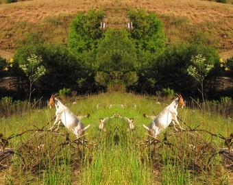 Mirror 253 Signed edition 2/11_big print_ goat field tree California meadow_Loree Harrell; The Mirror Project_archival print canvas metal