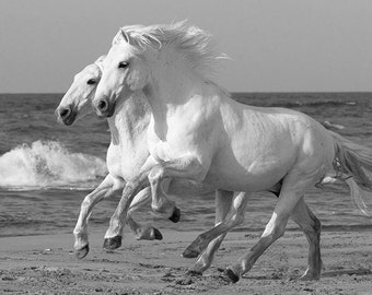 White Horses Race on the Sand -  Fine Art Horse Photograph - Horse - Camargue - Black and White - Fine Art Print