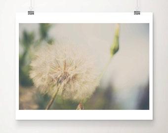 dandelion photograph dandelion print nature photography flower photograph flower print english garden photograph botanical print