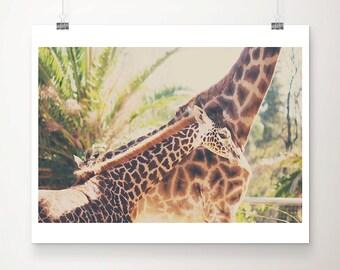 giraffe photograph animal photography nursery wall art baby giraffe print animal print zoo decor zoo print giraffe art