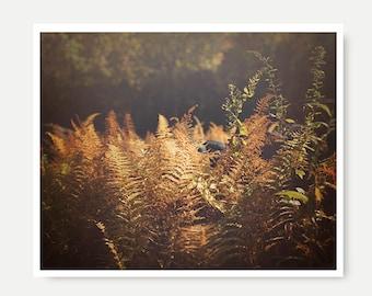 Nature Print, autumn print, nature photography, fall landscape print, ferns, fall print, autumn decor, dreamy landscape