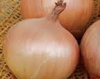 New York Early Onion Yellow Superior Storage Variety Very Rare Open Pollinated Seeds