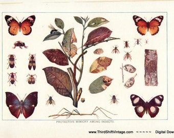 "Digital Download ""Protective Mimicry Among Insects"" Illustration (c.1900s) - Instant Download of Insects, Butterflies, Moths"