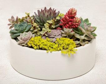 Concrete Planter, Concrete Bowl, Round Concrete Planter, Cement Planter, Cement Bowl, Succulent Planter, Cactus Planter