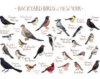New York Backyard Birds Field Guide Art Print / Watercolor Painting / Wall Art / Nature Print / Bird Poster