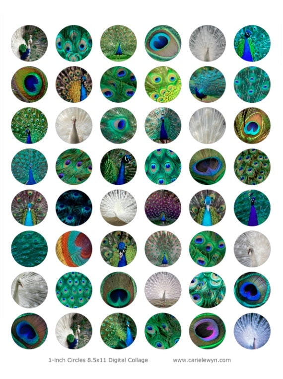 Peacock Bottlecap Images V2 Peacocks