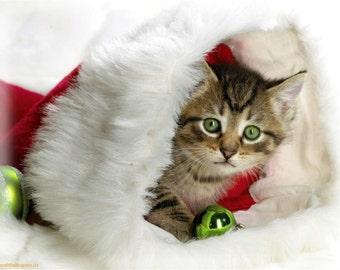 4 Kitten Cat Kittens Cats Christmas Santa Claus Stationery Greeting Notecards/ Envelopes Set