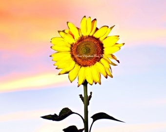 Sunflower Art,Rustic Home Print,Sunset,Rainbow Colors,French Country,Nursery Art,Sunflower Kitchen,Golden Yellow, Orange, Lavender, Blue Sky