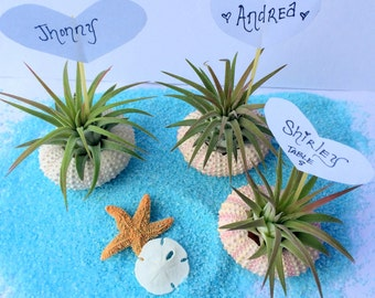 Air Plant Sea Urchin Wedding Name Cards Quantity of 70