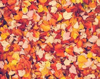 Fall Print, Fall Foliage Leaves, Vibrant, Bright Red Green Orange Colorful, New England Autumn, Harvest Fall Thanksgiving, Fine Art Print