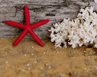 Beach Wedding Decor Red Starfish Painted Starfish - Beach Wedding Decor, Painted Starfish, Starfish Decor, Natural Starfish, Starfish