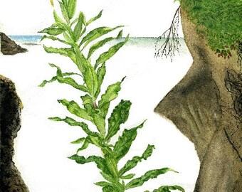 Botanical Notecard, Yellow Evening Primrose in watercolor