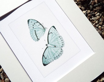 Soft Blue Butterfly Naturalist Study Archival Print