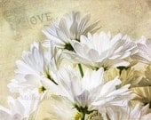 Romance Love White Daisy Flower Bouquet Shabby Cottage Chic / Rustic Elegance  4 x 5  8x10  16 x 20  Photography Print, Free Shipping USA