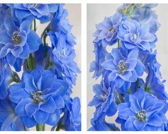 Periwinkle Blue Delphinium Flower Botanical Print Set -Fine Art Photograph - 2 Deep Blue Floral Art Prints - Home Decor