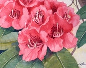 Pink Flower Painting Original Watercolor Rhododendron Floral Garden Art Matted 8x10 by  Janet Zeh