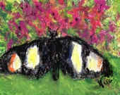 Original Colorful Tropical Butterfly Miniature Bright Oil Pastel Chalk Art on Paper by Niki Hilsabeck