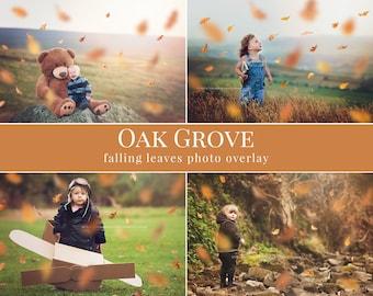 "Fall photo overlays ""Oak Grove"", falling leaves photo overlay, autumn photo overlays for Photoshop"