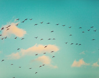 Flock of Birds in a Teal Sky Nature Photography nursery decor