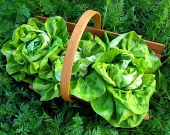 Tom Thumb Lettuce, mini butterhead, 100 heirloom seeds, non GMO, patio garden, container size, Monticello favorite, farmers markets