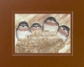 Instant Download 5x7 Print from Watercolor Painting Barn Swallow Chicks PDF for matting and framing