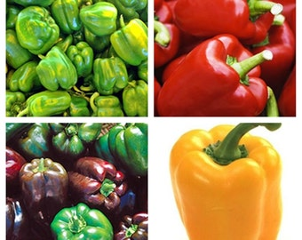 Best Heirloom Gourmet Sweet Pepper Seeds Collection Non GMO