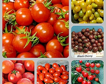Best Cherry Tomato Seed  Collection  Heirloom Non GMO