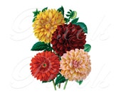 DAHLIAS Instant Download red yellow flower wedding clipart 166